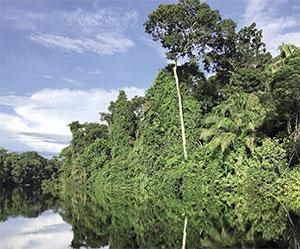 amazonia_floresta_rio_s_opt