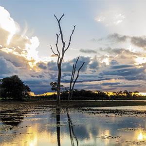 pantanal_shutterstock_1_opt