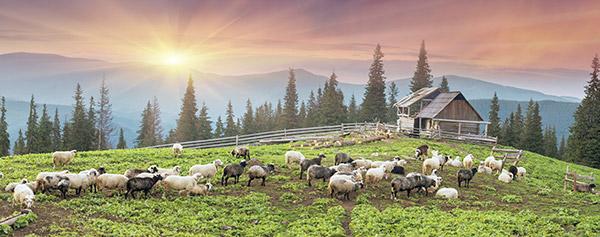 paisagem_ovelhas_shutt_opt